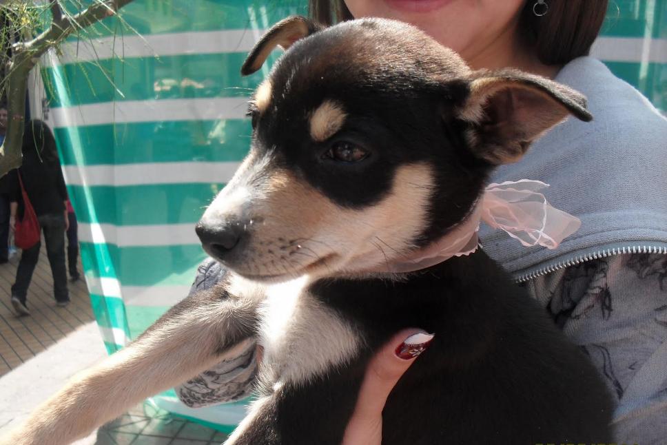 PRODAS: La agrupación que vela por el bienestar de los animales abandonados en Antofagasta